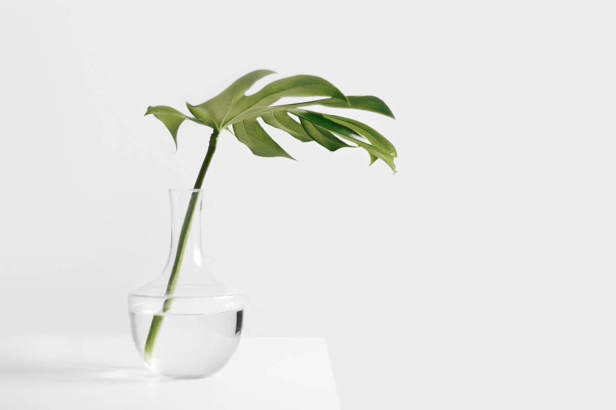 Plant in clear vase on a simple white table - how to simplify your life