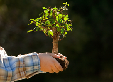 The Curious Case Of The Bonsai Tree